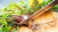 Kemoterapiden Yüz Kat Daha Etkili İnanılmaz Bitki