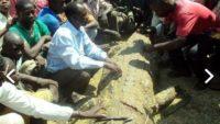 Hamile eşini yiyen timsahı öldürdü, o anları gözyaşlarıyla anlattı.
