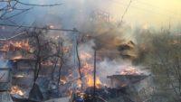 Artvin'deki yangın kontrol altında